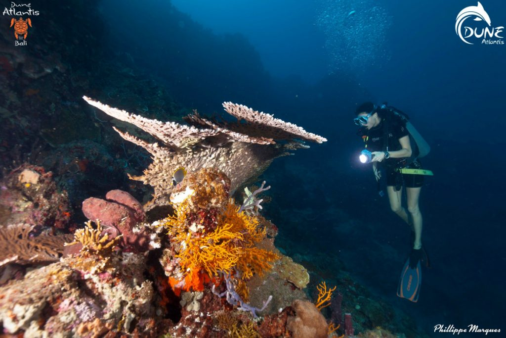 Arranging Scuba Diving Holiday for Beginners; the Easy Way