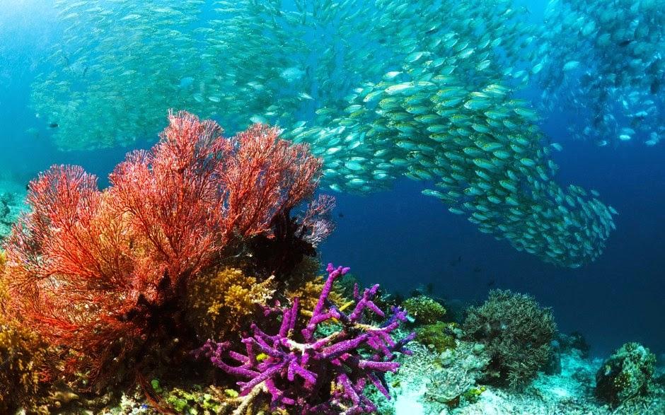 underwater waigeo island