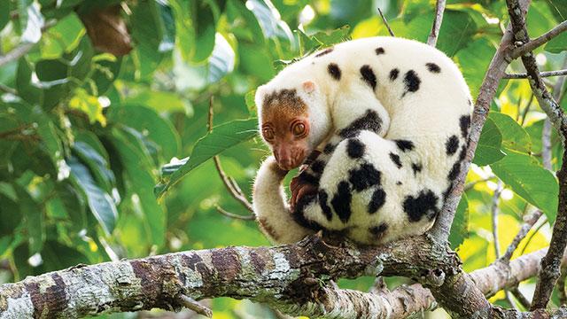 wildlife waigeo island